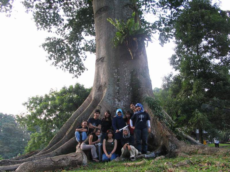 Eorlingas - Party Tree: This kapok tree at the Bogor Botanical Garden, fondly known as Mirkwood to Eorlingas members, was the closest thing to a mallorn tree we had. It grew straight for thirty meters, even more, before branching out. We held a couple of picnics here, including a Tengwar lesson, before we learned the tree had to be felled because a branch had fallen on a visitor.